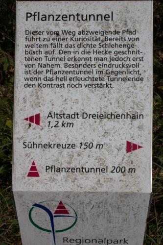 Pflanzentunnel aus Schlehengebuesch-2
