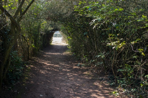 Pflanzentunnel aus Schlehengebuesch