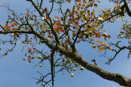 Haengende Birnen