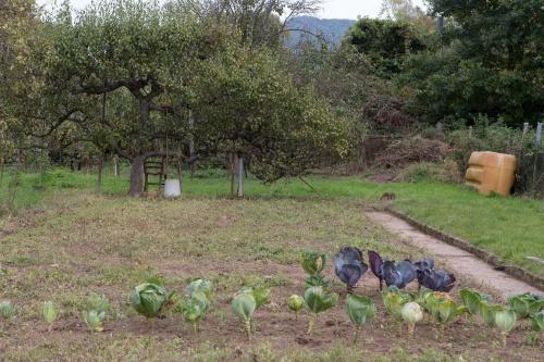 Kohl und Apfel am Glan