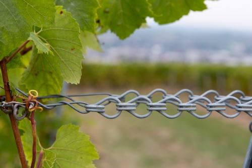 Wein-Spanner
