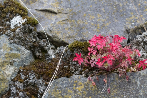 Rot auf Fels