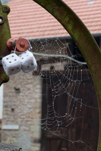 Spinnennetz mit Tropfen am Mistheber