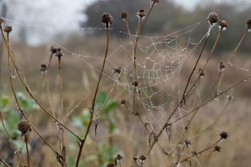 Spinnennetz mit Tropfen