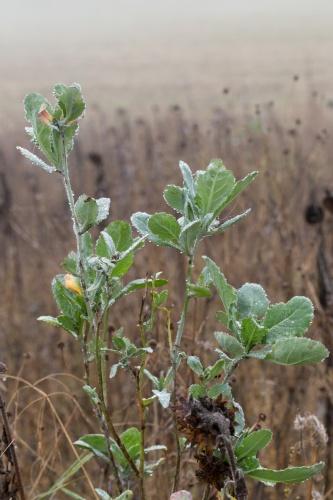 Tropfen an gruener Pflanze