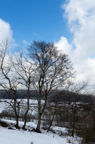 Baumreihe vor Himmel bei Simmershausen