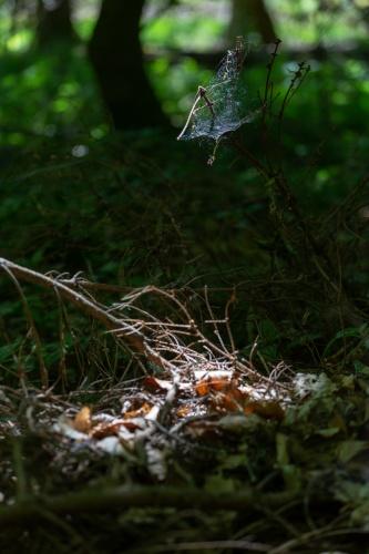 lichtpruetze auf Spinnennetz