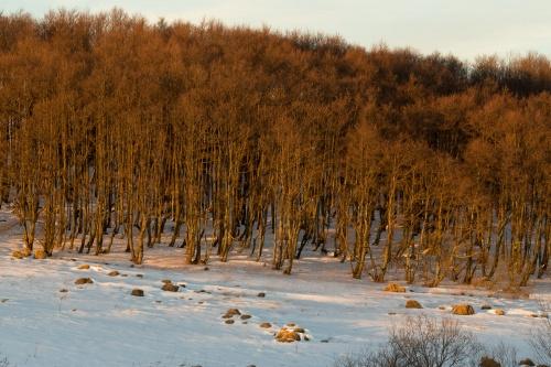 Wald im Abendlicht mit Felsen