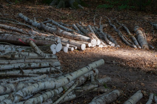 Bianca Bischer und Stefanie Welk, Wald Weites Web-2