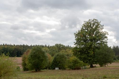 Eiche in Weimarschmieden