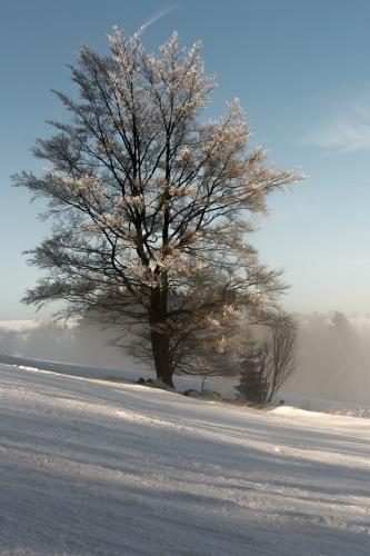 Baum nahe Thueringer Huette