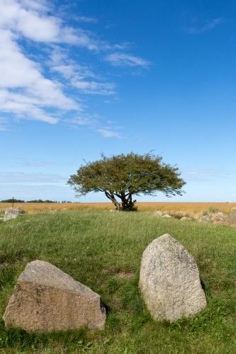Weissdorn am Grosssteingrab Nobbin Habitus mit Himmel
