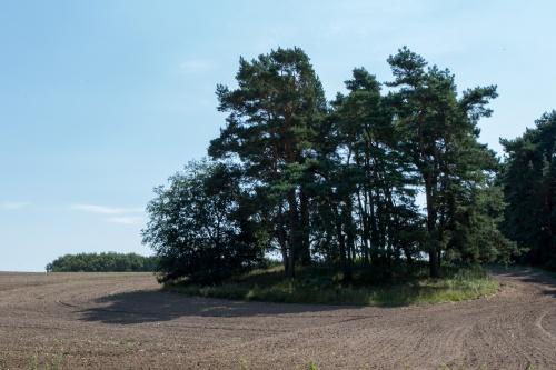 Grosssteingrab Dummertevitz