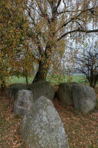 Grosssteingrab mit Birke