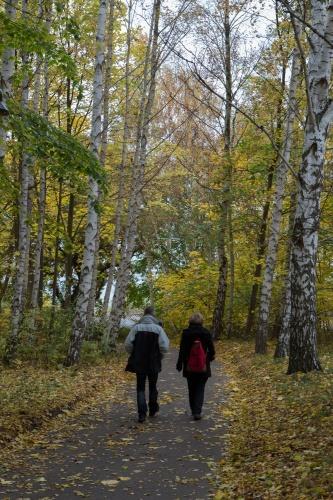 Birken auf Vilm