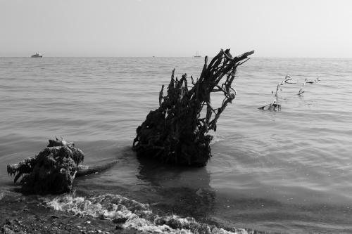 In der Ostsee gelandet