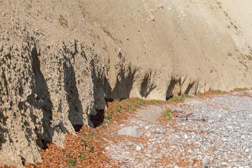 Buchenlaub am Kliff