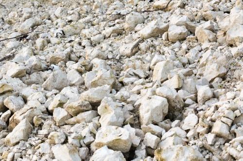 Erosion an der Kreidekueste-11