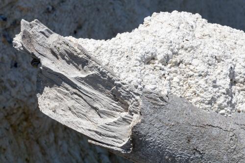 Erosion an der Kreidekueste-13