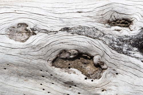 Totholz an der Kreidekueste-15