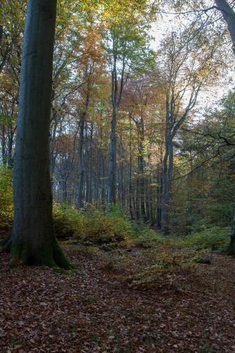 Buchenwald bei Sassnitz