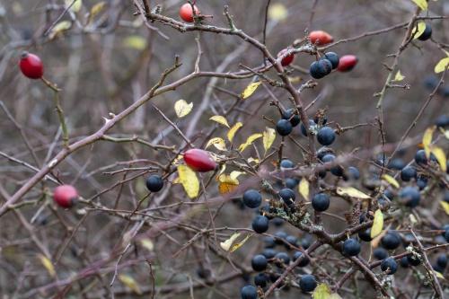 Gemischte Beeren