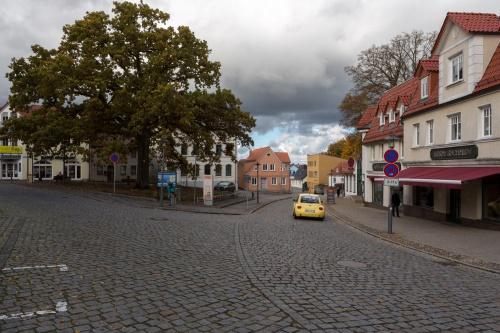 Billroth-Eiche