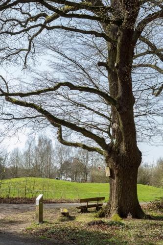 Huteeiche 1 Golfplatz